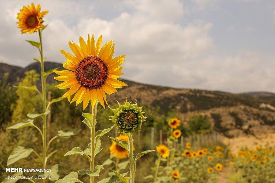 گردشگری کشاورزی چیست؟ ، کشاورزی چگونه جاذبه گردشگری شود؟