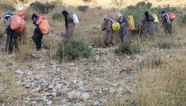 تکذیب کوله بری زنان در کردستان